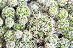 Sluit omhoog van de achtergrond van de cactustextuur Stock Foto's