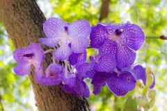 Sluit omhoog van de bloem van een purpere orchidee stock fotografie