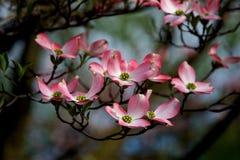 Sluit omhoog van de bloesems van de de lentebloem Stock Foto's