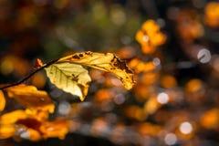 Sluit omhoog van de herfstblad Royalty-vrije Stock Afbeeldingen