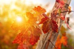 Sluit omhoog van de herfstgebladerte stock foto's