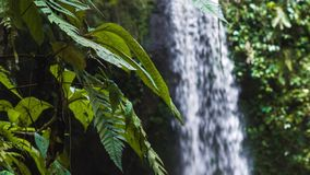 Sluit omhoog van de installaties die van de wildernisvaren zich door wind van een tropische waterval bewegen stock videobeelden