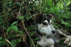 Sluit omhoog van de kant van een zwarte met wit en leuk hoofd van een puppy met bos op de achtergrond royalty-vrije stock fotografie