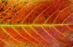Sluit omhoog van de kleurrijke kleuren van het texturenblad Stock Fotografie