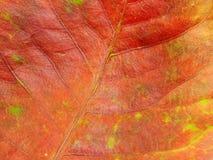 Sluit omhoog van de kleurrijke kleuren van het texturenblad Stock Afbeeldingen