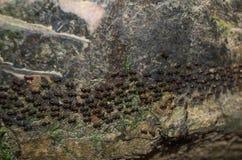 Sluit omhoog van de kolonie van de mieren die in lijnen gaan stock afbeeldingen