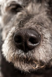 Sluit omhoog van de natte neus van een hond royalty-vrije stock foto's