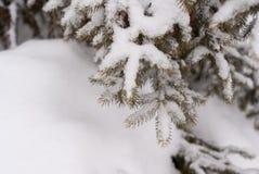 Sluit omhoog van de tak van de pijnboomboom met sneeuw met sneeuw in de voorgrond wordt behandeld die royalty-vrije stock afbeelding