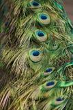 Sluit omhoog van de veren van een pauwenstaart royalty-vrije stock afbeeldingen