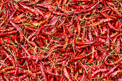 Sluit omhoog van in de zon gedroogde Spaanse pepers, voedselingrediënt Stock Foto