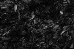 Sluit omhoog van donkere zwarte de textuur abstracte achtergrond van de veerwol, Stock Foto's