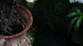 Sluit omhoog van doorbladert van een tropische bloem stock footage