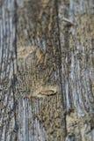 Sluit omhoog van doorstaan hout Royalty-vrije Stock Foto's
