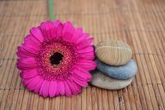 Sluit omhoog van Drie zenstenen met roze gerbermadeliefje op bamboeriet Stock Foto