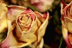 Sluit omhoog van droge rozen op donkere achtergrond stock fotografie