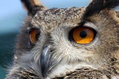 Sluit omhoog van Eagle Owl Royalty-vrije Stock Afbeeldingen