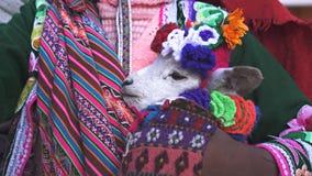 Sluit omhoog van een babylama die door een meisje in cusco, Peru worden gehouden stock footage