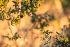 Sluit omhoog van een bij op gele bloemen en groene bladeren wordt gesteld dat stock fotografie
