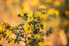 Sluit omhoog van een bij op gele bloemen en groene bladeren wordt gesteld dat royalty-vrije stock foto