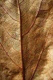 Sluit omhoog van een blad, gloden bruin in de herfst Stock Fotografie
