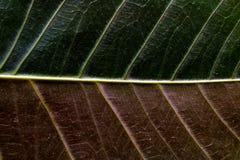 Sluit omhoog van een blad met twee kleuren stock fotografie