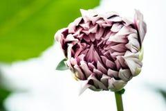 Sluit omhoog van een bloem royalty-vrije stock foto