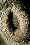 Sluit omhoog van een boomboomstam Royalty-vrije Stock Foto's