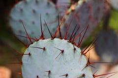 Sluit omhoog van een cactusinstallatie stock fotografie