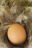 Sluit omhoog van een ei Stock Foto
