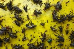 Sluit omhoog van een geel kleverig document met veel vliegen stock afbeelding