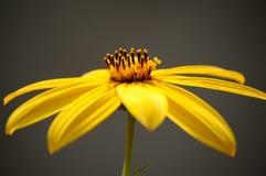 Sluit omhoog van een gele bloem Stock Foto