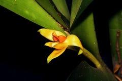 Sluit omhoog van een gele orchideebloem stock afbeeldingen