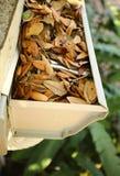 Sluit omhoog van een goot met eiken bladeren wordt gevuld dat royalty-vrije stock fotografie