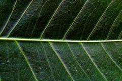 Sluit omhoog van een groen blad stock fotografie