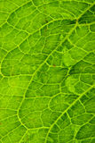 Sluit omhoog van een groen blad. royalty-vrije stock afbeeldingen