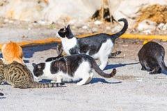 Sluit omhoog van een groep katten royalty-vrije stock afbeelding