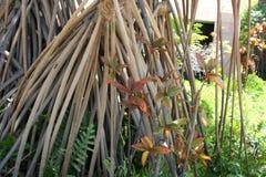 Sluit omhoog van een Hala Tree-steunwortels stock afbeeldingen