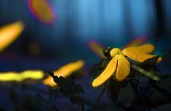 Sluit omhoog van een insect stock afbeeldingen