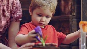Sluit omhoog van een jongenstuinman die bloemen in potten planten Het mamma en de zoon zijn bezig geweest met het tuinieren, plan stock video