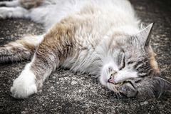 Sluit omhoog van een kat stock fotografie