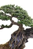 Sluit omhoog van een knobbelige boomstam stock foto