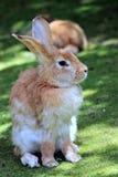 Sluit omhoog van een konijn Royalty-vrije Stock Afbeeldingen