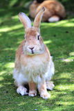 Sluit omhoog van een konijn Stock Afbeeldingen