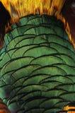 Sluit omhoog van een mannelijke pauw die zijn overweldigende staartveren tonen Stock Fotografie