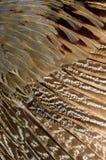 Sluit omhoog van een mannelijke pauw die zijn overweldigende staartveren tonen Stock Afbeeldingen