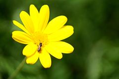 Sluit omhoog van een mooie bloem en een bij stock afbeeldingen