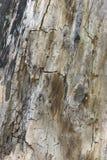 Sluit omhoog van een mooie oude geweven schors van een boom royalty-vrije stock afbeeldingen
