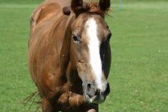 Sluit omhoog van een paard Stock Foto's