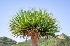 Sluit omhoog van een palm royalty-vrije stock afbeeldingen