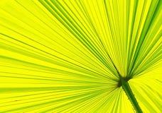 Sluit omhoog van een palmblad pattern2 Royalty-vrije Stock Fotografie